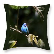 Indigo Bunting - Img-428-003 Throw Pillow