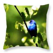 Indigo Bunting - Img_459-002 Throw Pillow