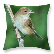 Indigo Bunting Passerina Cyanea Female Throw Pillow