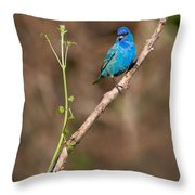 Indigo Bunting Portrait Throw Pillow