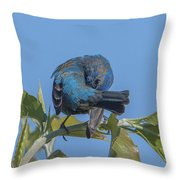 Indigo Bunting Preening Dsb229 Throw Pillow