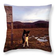 Indy On The Glan Y Mor Elias. Throw Pillow