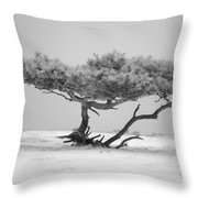Infrared Photo Of Pine In Winter Landscape In The Nature Dwingelderveld In The Netherlands Throw Pillow by Ronald Jansen