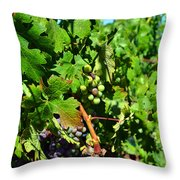 Inglenook Vineyard -10 Throw Pillow