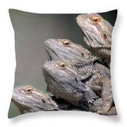 Inland Bearded Dragons Throw Pillow