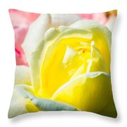 Inner Light Of Rose Throw Pillow