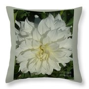 Innocent White Dahlia  Throw Pillow