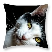 Inquisitive Kitty Throw Pillow