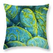 Intestinal Microvilli Sem Throw Pillow by Spl