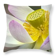 Intimate Sacred Lotus Bloom Throw Pillow