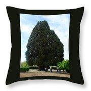 Iran Yazd Cedar Tree Throw Pillow