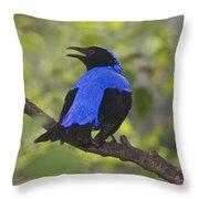 Irena Puella Asian Fairy Bluebird Throw Pillow