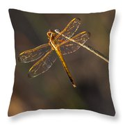 Iridescent Dragonfly Wings Throw Pillow