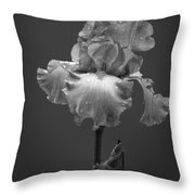 Iris After The Rain Throw Pillow