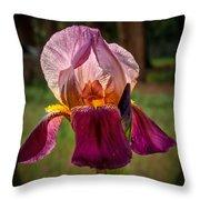 Iris In The Spotlight Throw Pillow