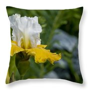 Iris Pictures 169 Throw Pillow