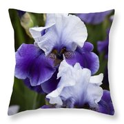 Iris Purple And White Fine Art Floral Photography Print As A Gift Throw Pillow