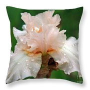 Iris With Dewdrops Throw Pillow