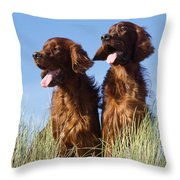 Irish Red Setter Dog Throw Pillow