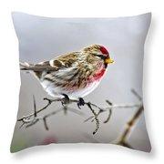 Irruptive Bird Common Redpoll Throw Pillow