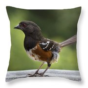 Is Cecil Around Throw Pillow
