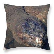 Island Turtle Throw Pillow