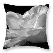 Isolated White Tulip Throw Pillow