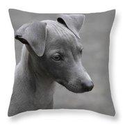 Italian Greyhound Puppy Throw Pillow