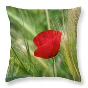 Italian Poppy Throw Pillow