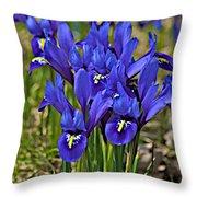 Ithaca Spring Throw Pillow