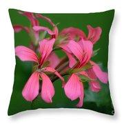 Ivy Geraniums Throw Pillow