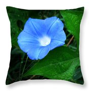 Wild Ivyleaf Morning Glory Throw Pillow