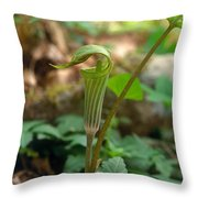 Jack-in-the-pulpit Arisaema Triphyllum Throw Pillow