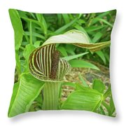 Jack In The Pulpit - Arisaema Triphyllum Throw Pillow