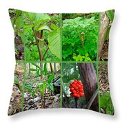 Jack-in-the-pulpit Wildflower    Arisaema Triphyllum Throw Pillow