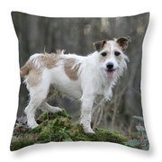 Jack Russell Dog In Autumn Setting Throw Pillow