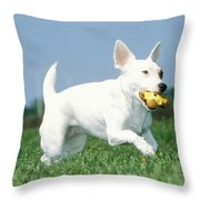 Jack Russell Terrier Dog Throw Pillow