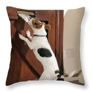 Jack Russell Terrier Gets Paper Throw Pillow