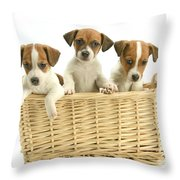 Jack Russell Terrier Puppies Throw Pillow