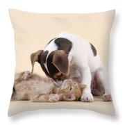 Jack Russell Terrier Puppy And Kitten Throw Pillow