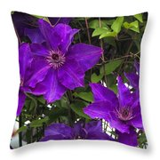 Jackmanii Purple Clematis Vine Throw Pillow