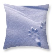 Jackrabbit Tracks In Snow Throw Pillow