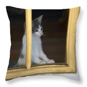 Jackson The Inquisitive Kitty Throw Pillow