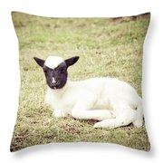 Jacob Lamb Throw Pillow