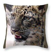 Jaguar-09499 Throw Pillow