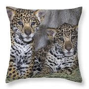 Jaguar Cubs Throw Pillow