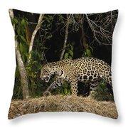 Jaguar Cuiaba River Brazil Throw Pillow