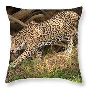 Jaguar Panthera Onca Foraging Throw Pillow