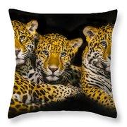 Jaguars Throw Pillow
