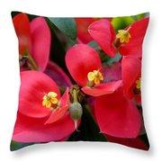 Jamaican Poinsettia Throw Pillow